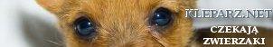 konie, pies, oddam psa, oddam kota, Koty, koteczki, adopcje kotów, karam dla kotów, dla kotów, Kuchnia, przepisy, gastronomia ,loklae, warszawa, KRaków , Tłumacz francuskiego , szkoła jezyków obcych Kraków e-learing, tłumaczenia francuski Kazania i homilie